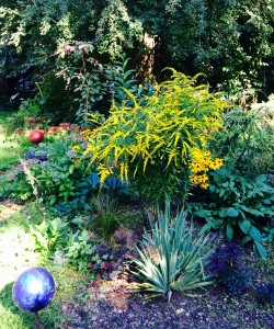 Goldenrod & Black Eyed Susan